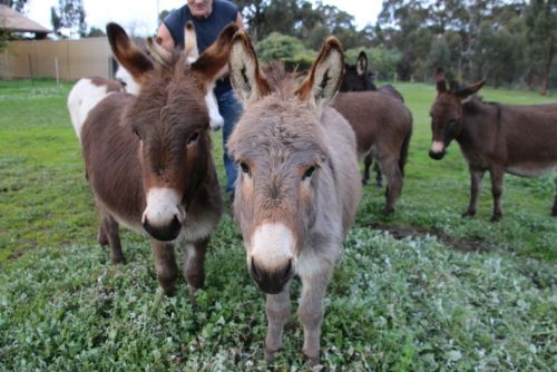 Donkey Tales Farm Cottages - Accommodation Port Hedland