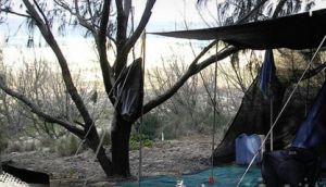 Main Beach Foreshore Camping Grounds - Accommodation Port Hedland