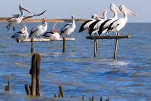Pelican Perch Retreat - Accommodation Port Hedland