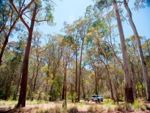 Coolah Tops National Park Camping - Accommodation Port Hedland