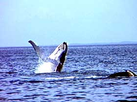 Whale Watching - Accommodation Port Hedland