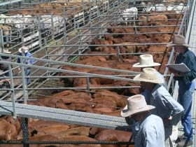 Dalrymple Sales Yards - Cattle Sales - Accommodation Port Hedland