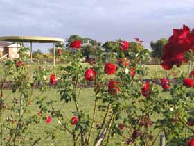 Elizabeth Park Rose Gardens - Accommodation Port Hedland