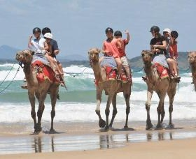 Camel Rides with Coffs Coast Camels - Accommodation Port Hedland