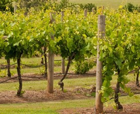 Mt Coghill Vineyard - Accommodation Port Hedland