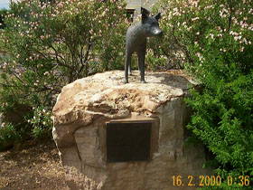 Dingo Statue - Accommodation Port Hedland