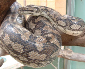 Armadale Reptile Centre - Accommodation Port Hedland