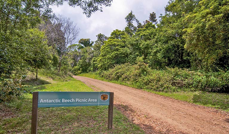 Antarctic Beech picnic area - Accommodation Port Hedland