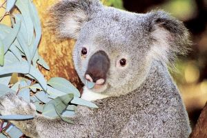 Perth Zoo General Entry Ticket and Sightseeing Cruise - Accommodation Port Hedland