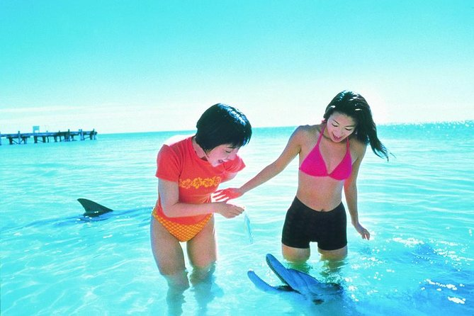 Monkey Mia Dolphins  Shark Bay Air Tour From Perth - Accommodation Port Hedland