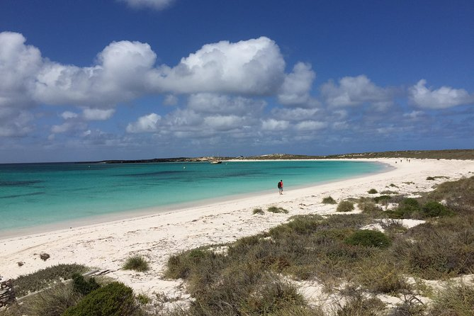Abrolhos Island Half Day Fly and Flipper - Accommodation Port Hedland