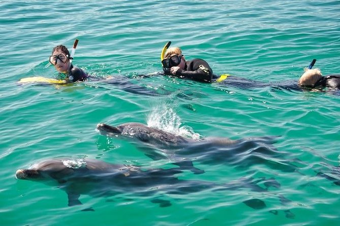 Swim with Dolphins Day Trip from Perth - Accommodation Port Hedland