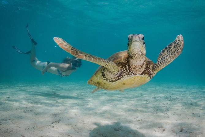 Marine Life Discovery  Lagoon Snorkeling Tour from Exmouth - Accommodation Port Hedland