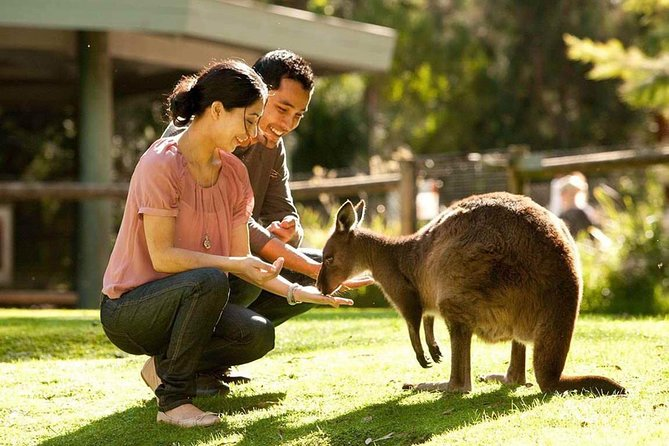 Very Best of Perth Tour - Wildlife Park  City Highlights Tour - Accommodation Port Hedland