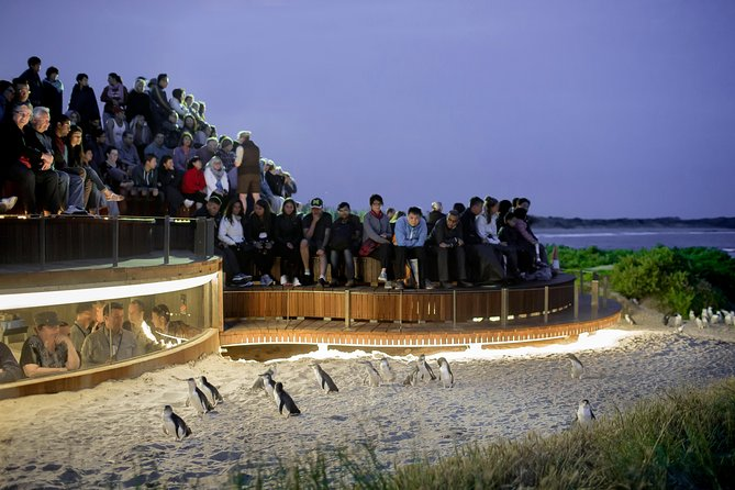 1 Day Private Phillip Island Tour VIP Charter up to 9 People - Accommodation Port Hedland