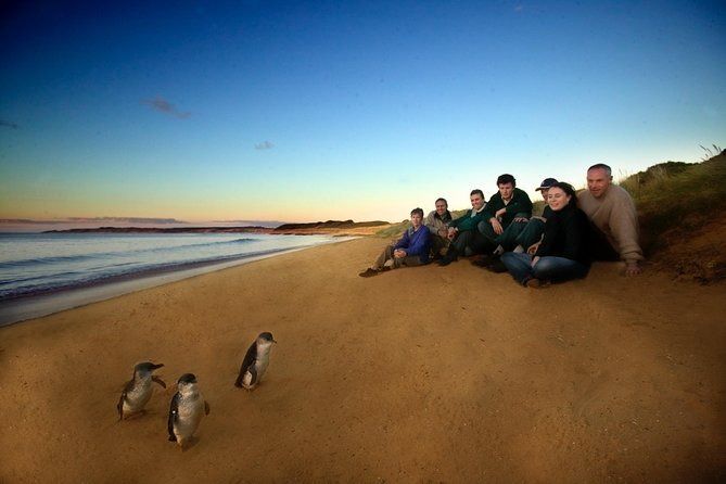 Phillip Island Ultimate Penguin Eco Tour or Skybox Experience - Accommodation Port Hedland