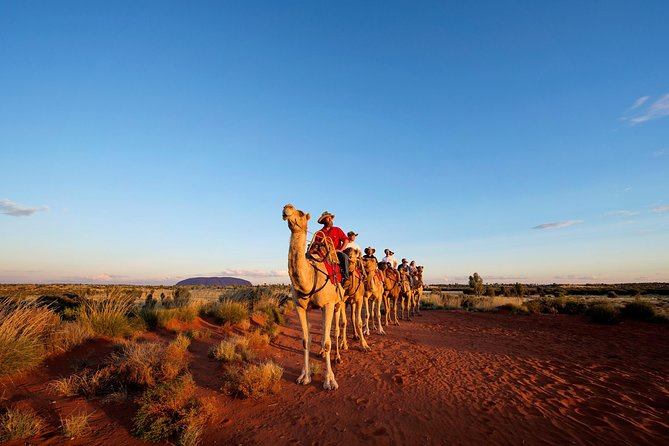 Uluru Camel Express Sunrise or Sunset Tours - Accommodation Port Hedland
