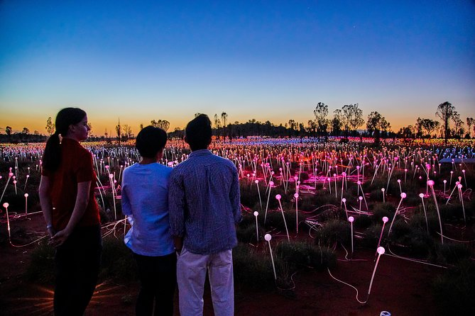 Uluru Field of Light Sunrise Tour - Accommodation Port Hedland