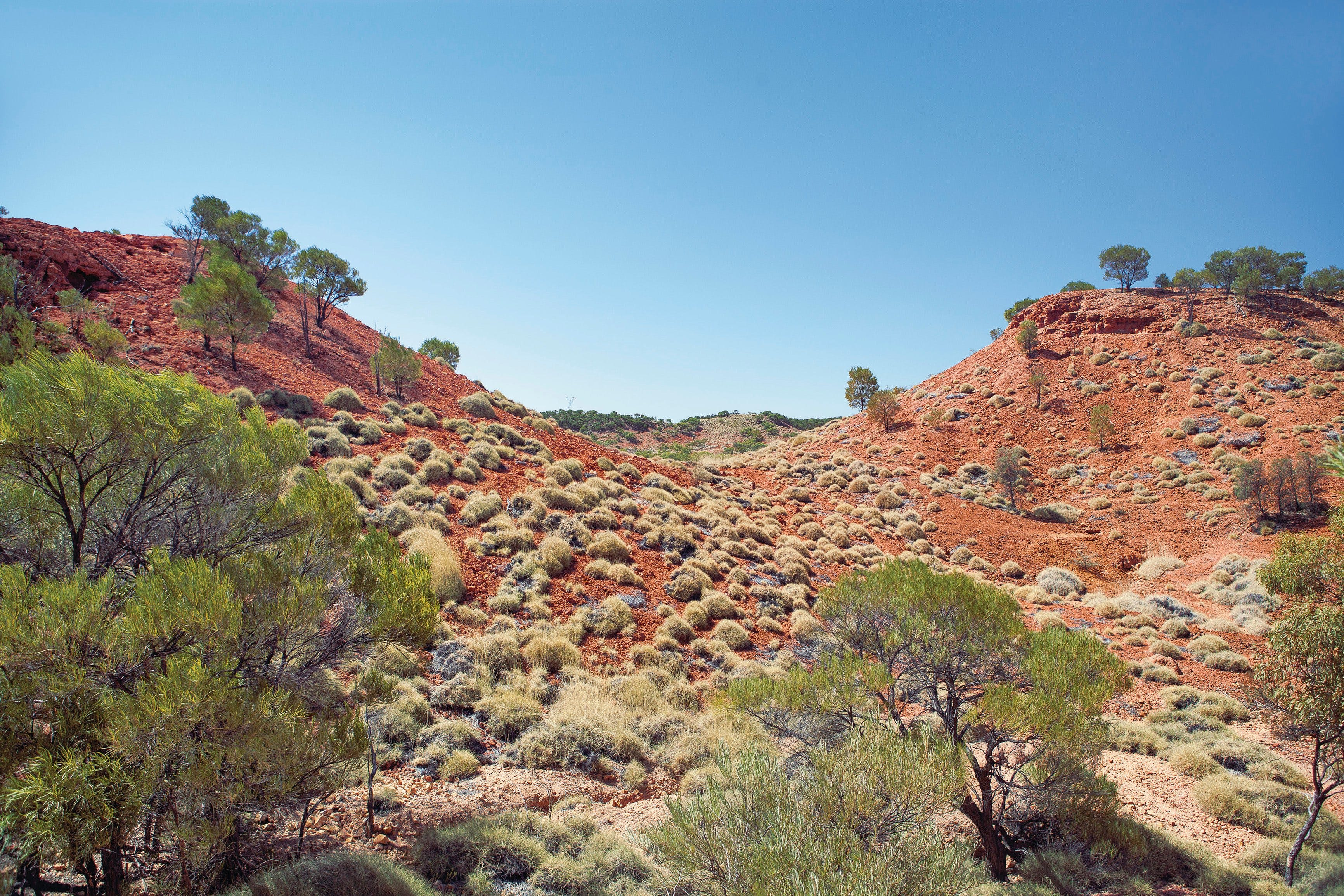 Lark Quarry Conservation Park - Accommodation Port Hedland