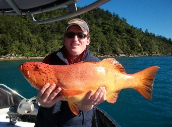 Gone Fishing by Coral Sea Fishing Charters Airlie Beach - Accommodation Port Hedland