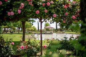 Griffith Spring Fest - Accommodation Port Hedland