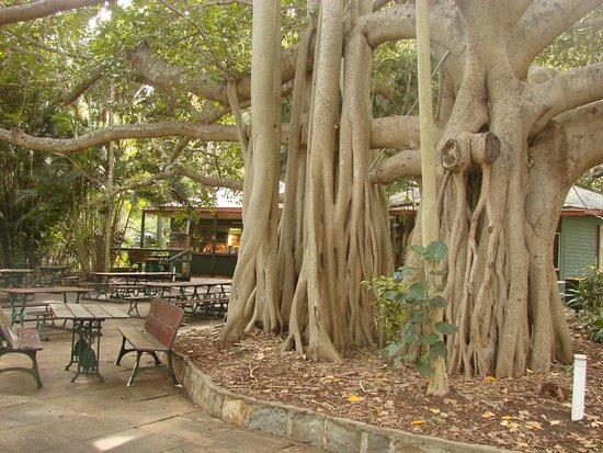 Gardens Tearooms - Accommodation Port Hedland